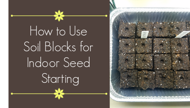 Soil Blocking: Pros and Cons to Using Soil Blocks in Indoor Seed Starting