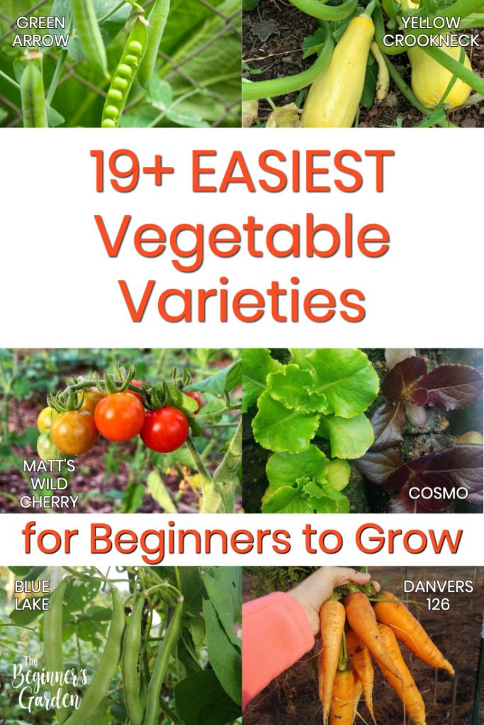 19 Easiest Vegetables to Grow for Beginners