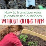 Hardening Off Seedlings without Killing them
