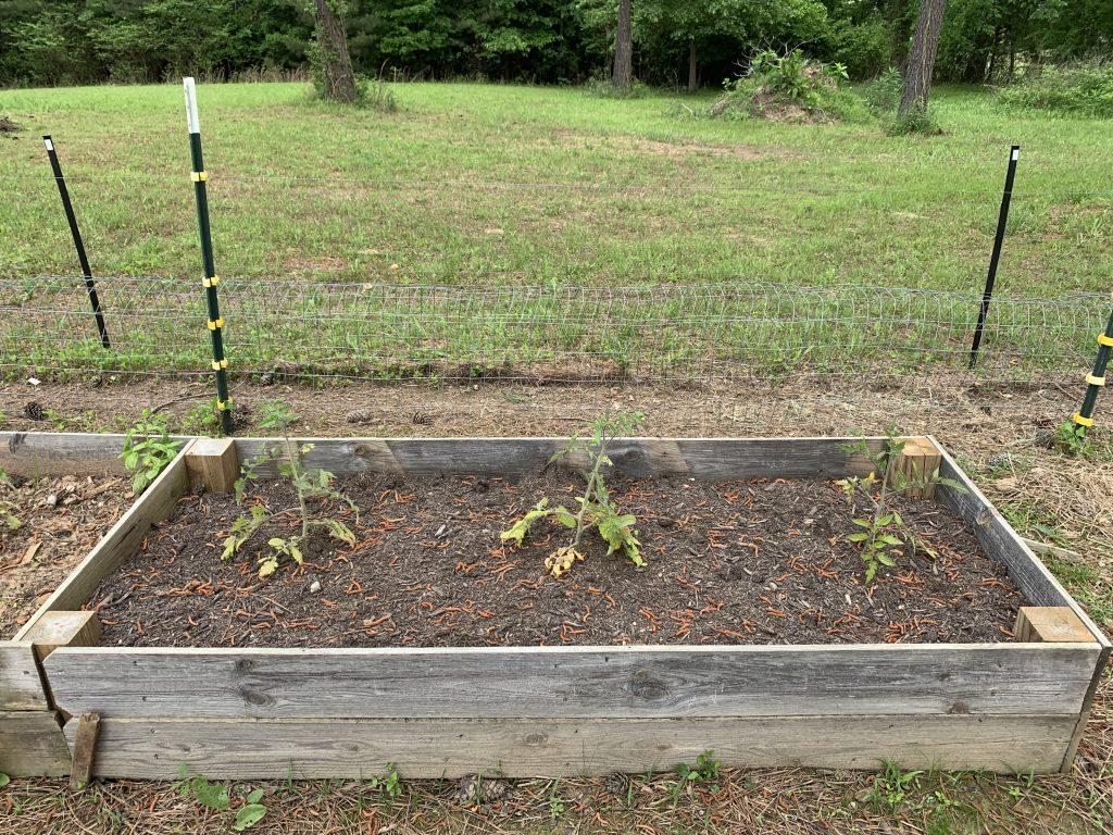 bagged garden soil for tomatoes