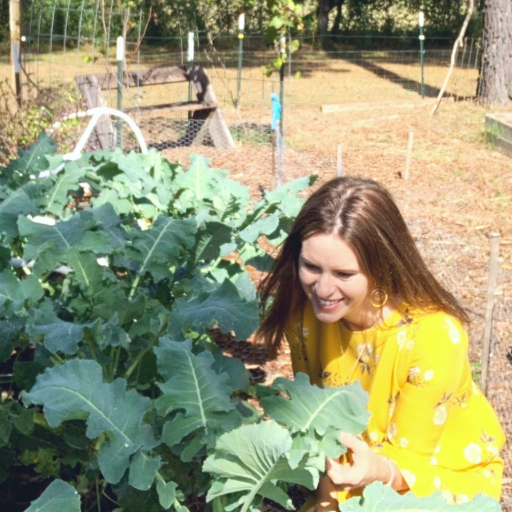 broccoli in raised bed soil mixes