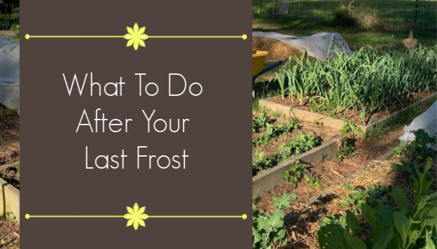 What to do After Your Last Frost