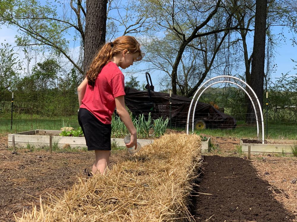 Girl conditioning straw bales for planting