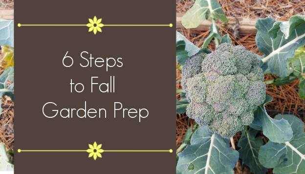 6 Steps to Fall Garden Prep