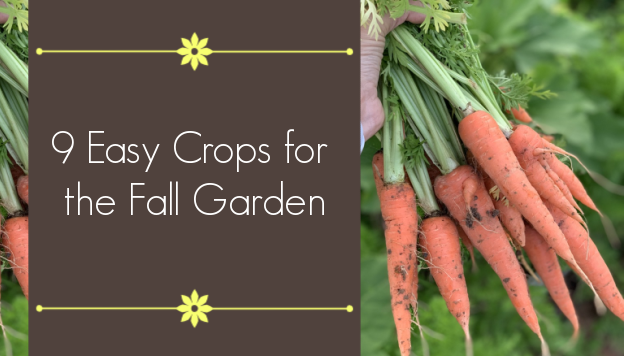 9+ Fall Crops for the Beginning Gardener