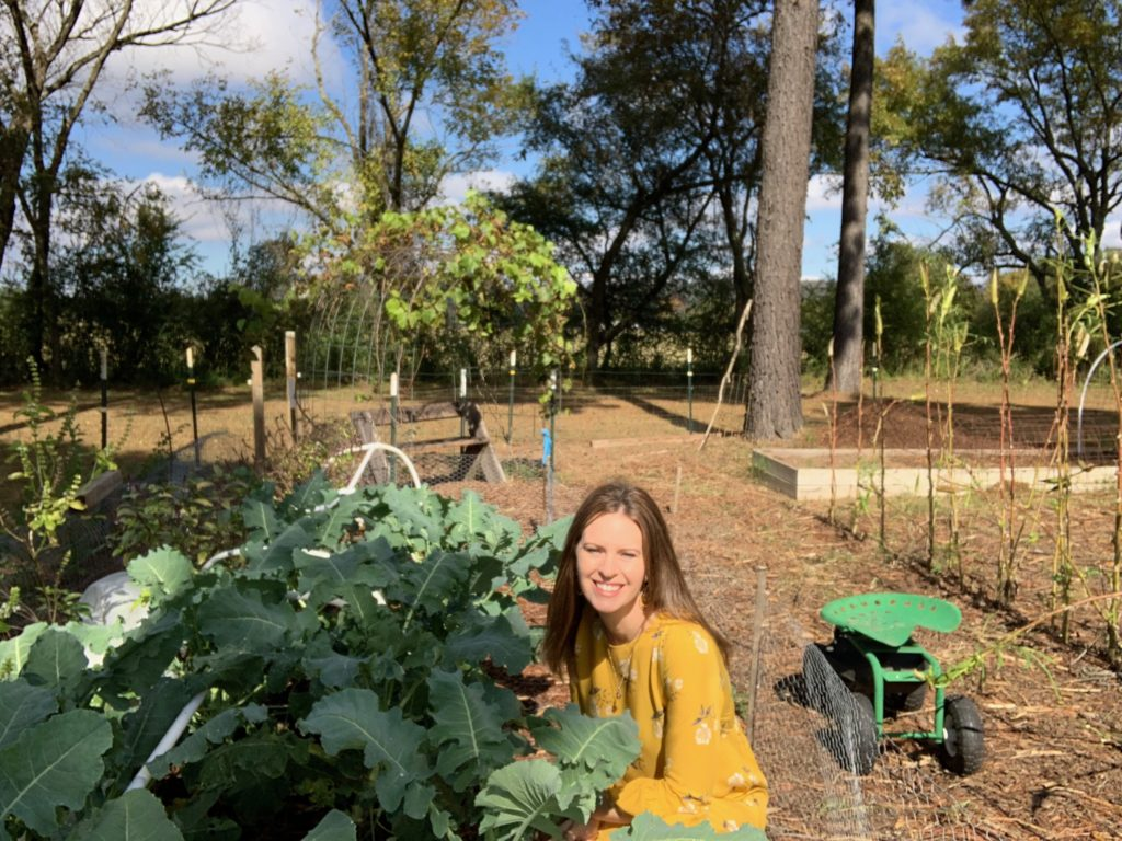 broccoli in raised beds