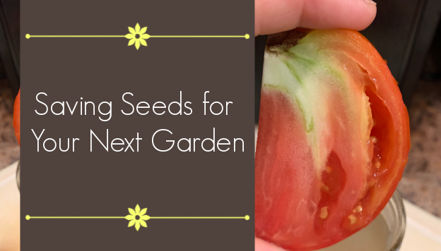 How to Save Seeds for Your Next Garden – A Beginner's Guide