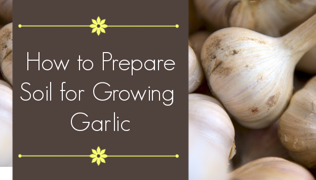 How to Prepare Soil for Growing Garlic