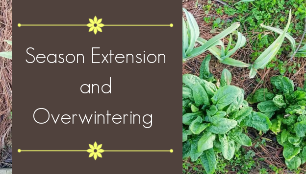 How to Harvest Longer through Season Extension and Overwintering