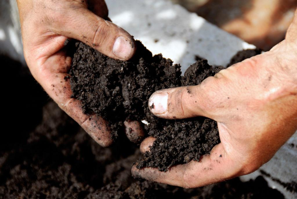 Hands working in soil