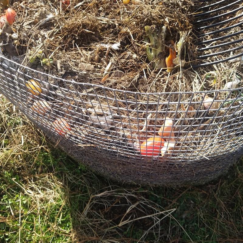 Kitchen scraps in compost pile