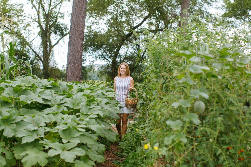 harvesting okra in garden