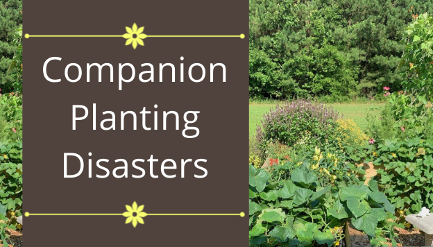 Companion Planting Disasters