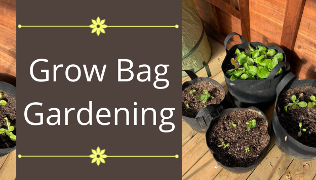 Grow Bags for Vegetable Gardening and More