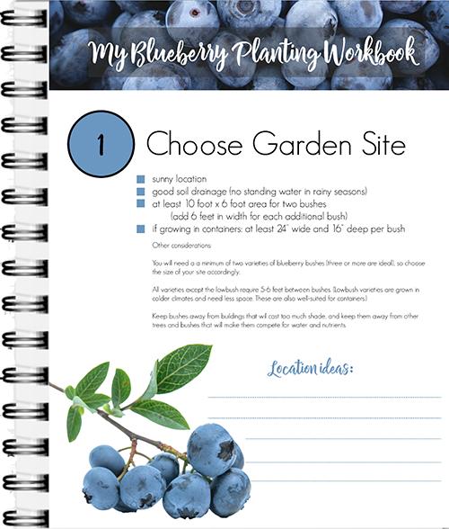 My Blueberry Planting Workbook