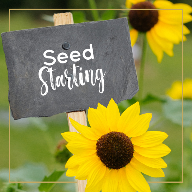 Seed Starting - Journey with Jill