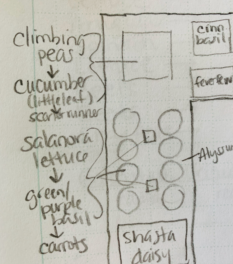 Garden plan sketch for succession planting