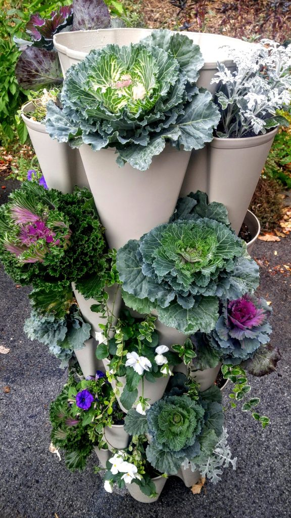 Greenstalk vertical planter filled with ornamental cabbage and flowers