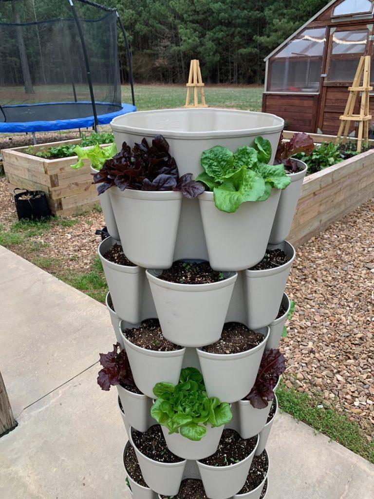 Greenstalk vertical planter with lettuce plants
