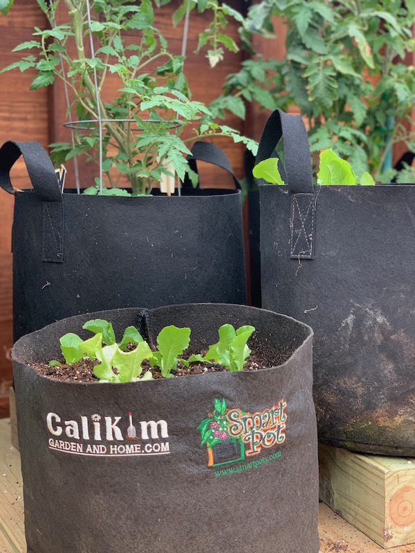Plants growing in fabric pots