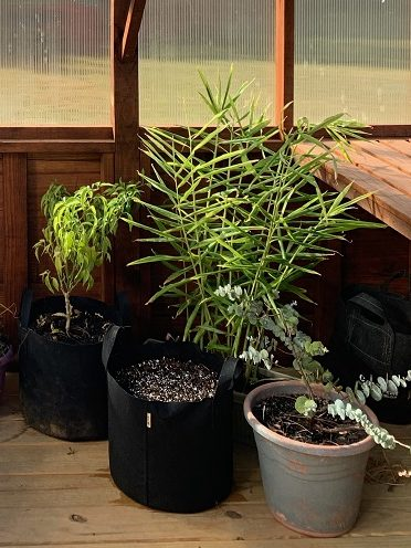 Potted plants inside a greenhouse